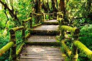 Doi Inthananon National Park 3