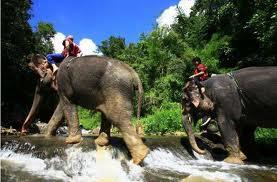 Patara Elephant Farm 3
