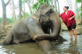 Patara Elephant Farm 5