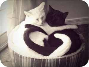 cat-heart1